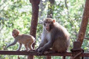 猴王与小猴