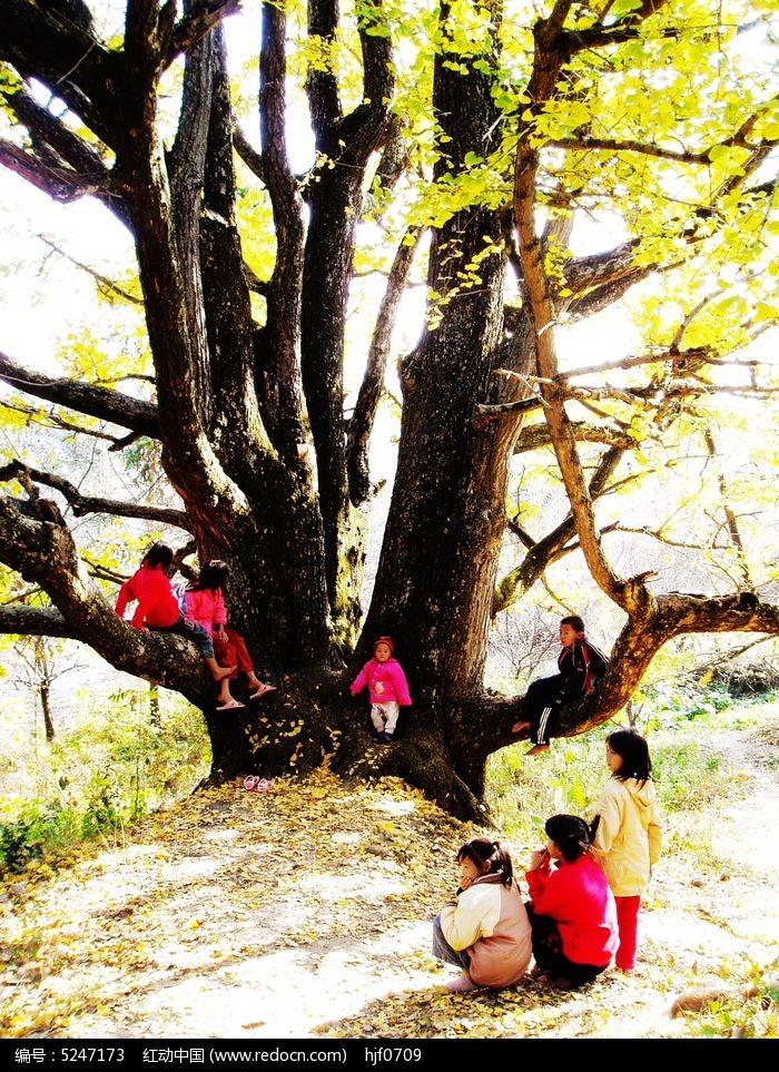 老树新苗图片,高清大图_森林树林素材