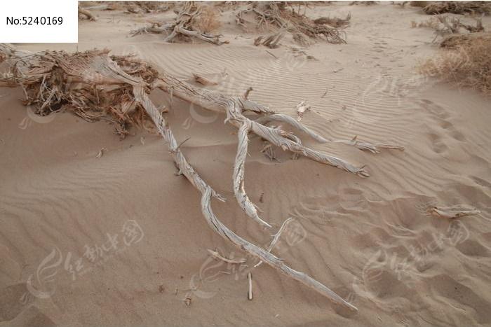 原创摄影图 动物植物 树木枝叶 沙漠枯树  请您分享: 红动网提供树木
