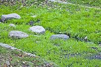 草地上的石头