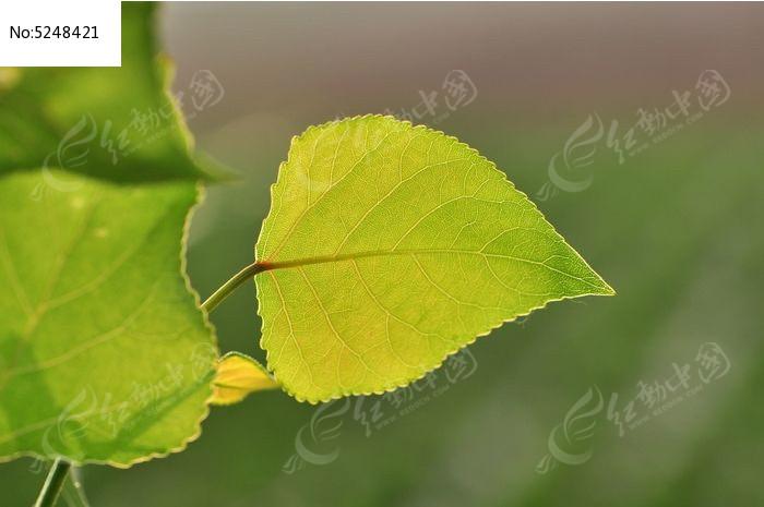 原创摄影图 动物植物 树木枝叶 绿色的树叶  请您分享: 红动网提供