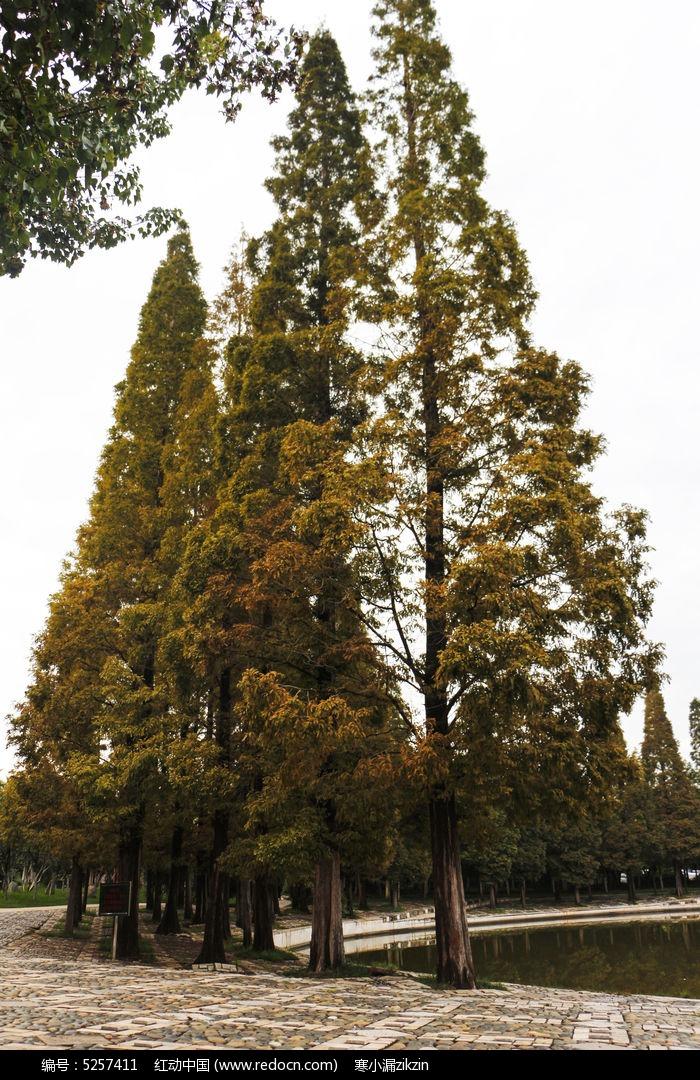 橙黄色漂亮的树木图片,高清大图_树木枝叶素材