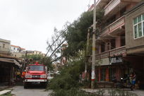 消防员在处理被风刮倒的树