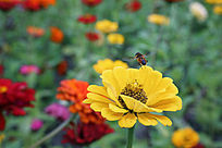 采蜜的小蜜蜂