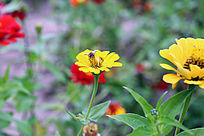采蜜黄色花朵