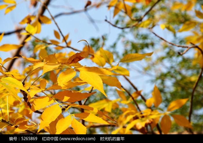 原创摄影图 动物植物 树木枝叶 秋天的树