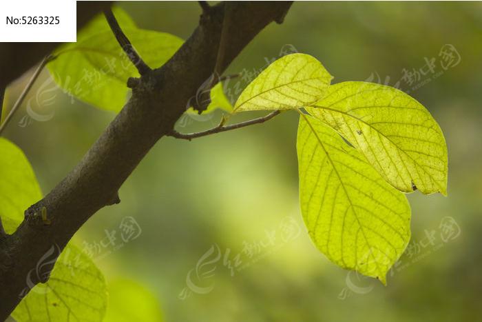 秋天的叶子图片,高清大图_树木枝叶素材