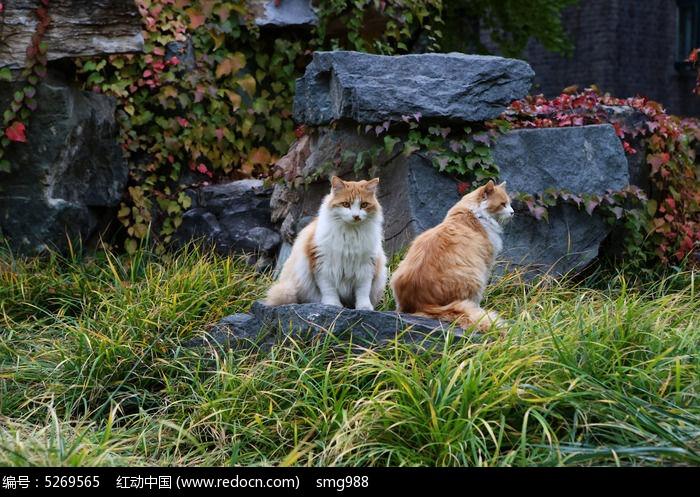 两只流浪猫图片,高清大图_陆地动物素材