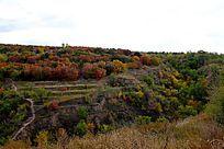 秋天山坡上的红叶