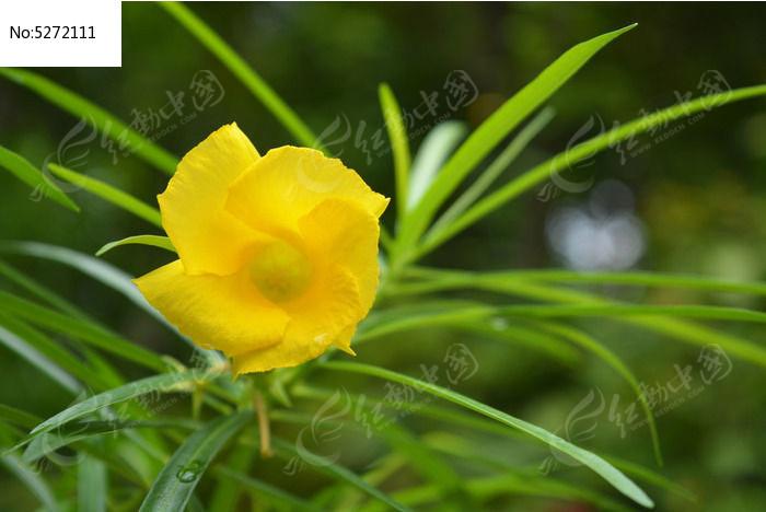 原创摄影图 动物植物 花卉花草 黄酒杯花  请您分享: 素材描述:红动网
