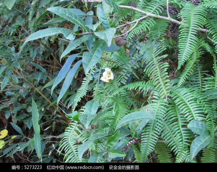 针叶植物图片