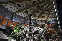 大型恐龙化石