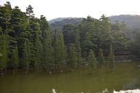 广州帽峰山上的树木