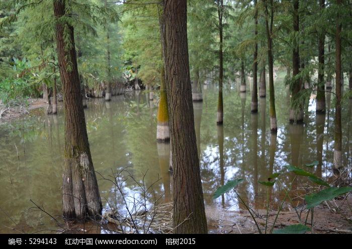 生长在水洼低处的树木图片,高清大图_树木枝叶素材