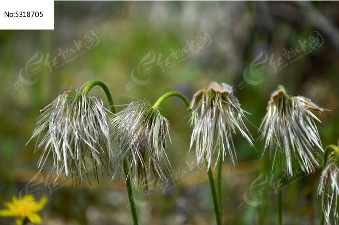 原创摄影图 动物植物 花卉花草 路边植物  请您分享: 红动网提供花卉
