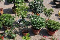 家庭养殖花卉