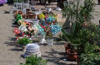 盆栽植物花