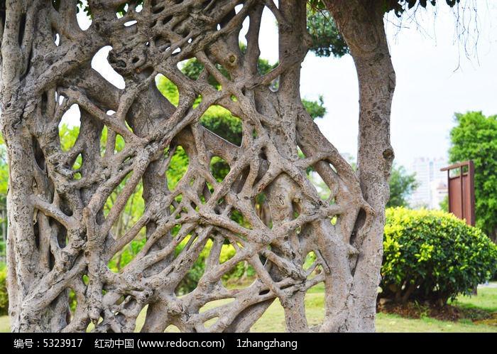 原创摄影图 动物植物 树木枝叶 蜘蛛网景观大树  请您分享: 红动网