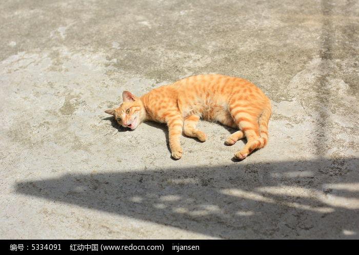 猫咪晒太阳图片,高清大图