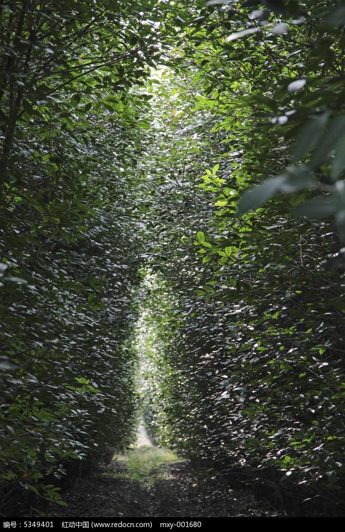 林木一线天