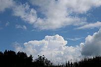 暗黑树林上空的蓝天白云