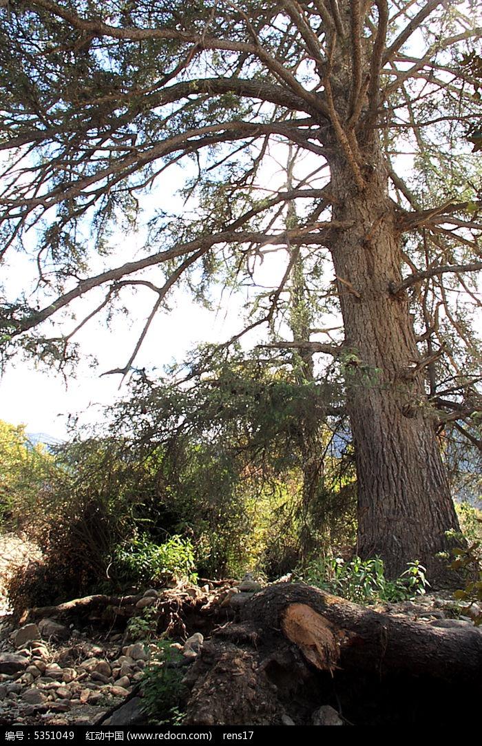 山上的古树图片,高清大图_山峰山脉素材