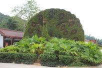 海南憋山寿谷的孔雀造型花坛