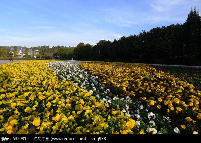 黄色景观植物名称