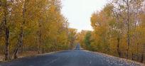 中国的66号公路张北坝上草原秋天风光