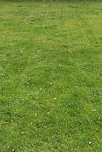 修正好的绿色草地