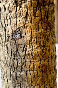 椰树爆裂纹