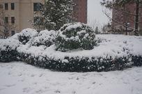 覆盖大雪的草丛