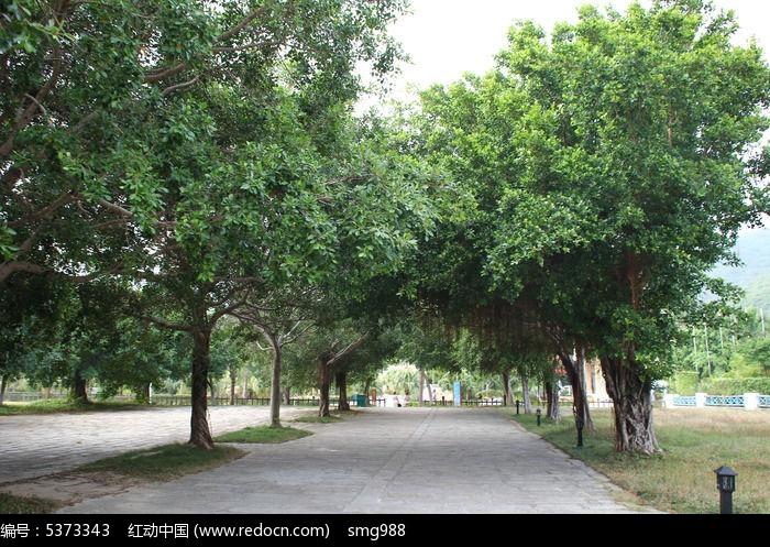 海南路边的热带植物图片,高清大图_树木枝叶素材