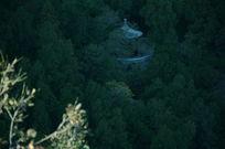 香山拍摄的森林中的亭子
