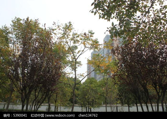 秋天公园树木图片,高清大图_建筑摄影素材