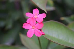 盛开的两朵小红花