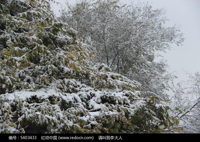 下雪的公园图片,高清大图_树木枝叶素材