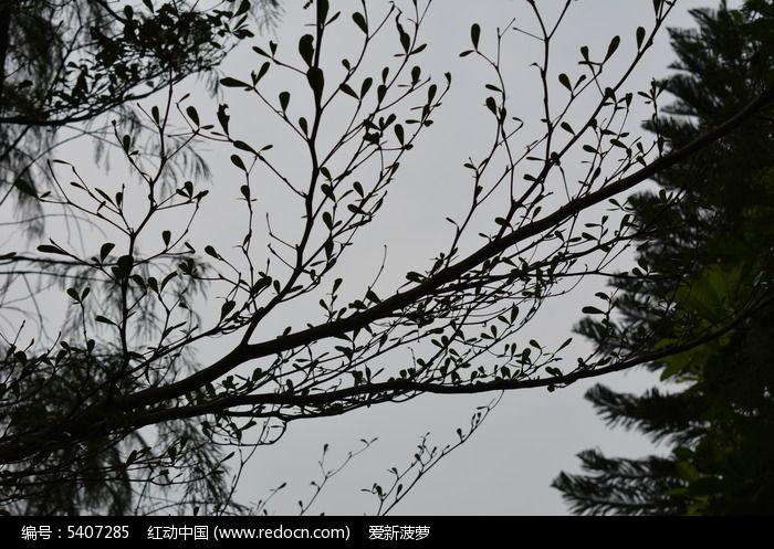 原创摄影图 动物植物 树木枝叶 平铺树  请您分享: 红动网提供树木