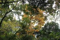 秋色 树叶