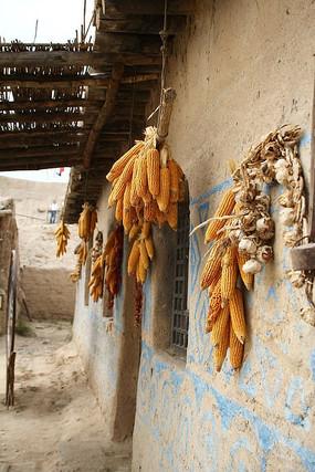 镇北堡土房农家民居挂玉米大蒜