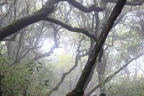 古老的树林