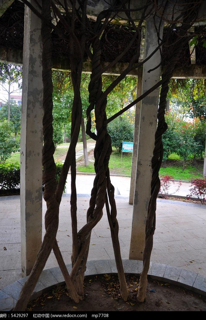 扭曲的藤条图片,高清大图_树木枝叶素材