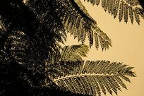 秋季植物剪影