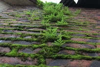 红砖墙上的青苔植物