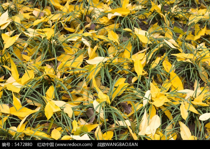 草地上的桃树叶高清图片下载 编号5472880 红动网