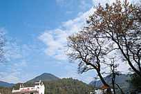 婺源的红枫树
