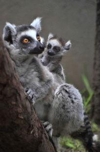 充满亲情的幼猴与母猴