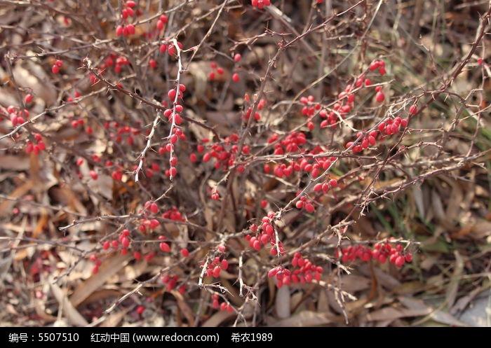 原创摄影图 动物植物 树木枝叶 冬天里的植物