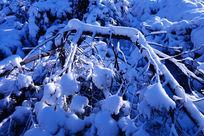 林海雪原树枝雪景