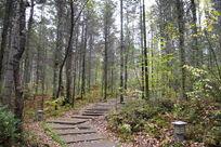 小兴安岭原始森林公园
